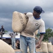 Man working hauling sacks of cocoa beans