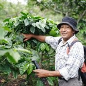 Man smiling while working with coffee plants