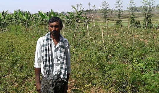 Integrated Farming for Improved Futures in India