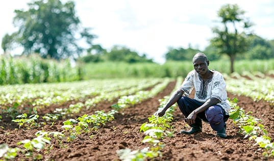 From the Ground Up: How Soil Testing Can Help Predict Return on Investment for African Farmers