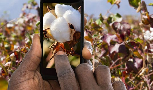 Win-Win Innovations in Smallholder Sourcing
