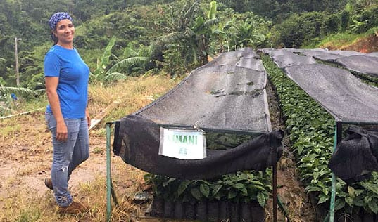 Revitalizing Puerto Rico's Coffee Industry