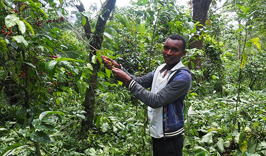 How Coffee Can Save Ethiopia's Forests