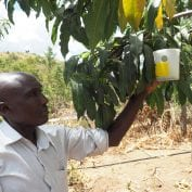 Moses Mwaniki tending to his fly traps