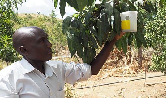 Partnering to Reduce Food Waste in Kenya
