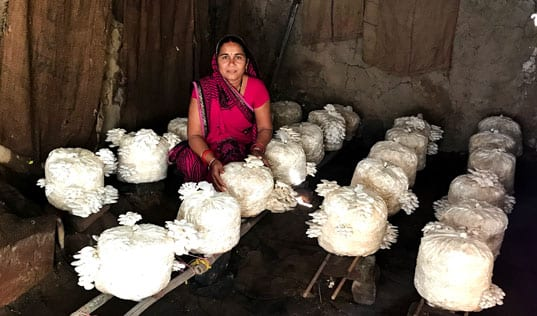 Can Mushrooms Transform the Lives of Smallholder Farmers in India?
