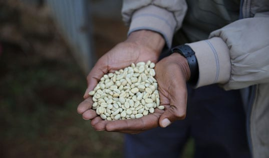 In Ethiopia, Coffee Creates Opportunity
