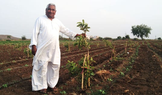 Orchards that Revitalize the Environment – and Farmers' Lives