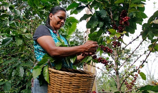 Empowering Women in Coffee