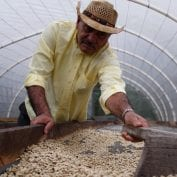 Man in Honduras raking coffee beans