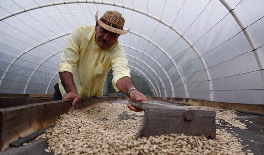 How Low-Cost Credit is Improving the Livelihoods of Smallholder Coffee Farmers