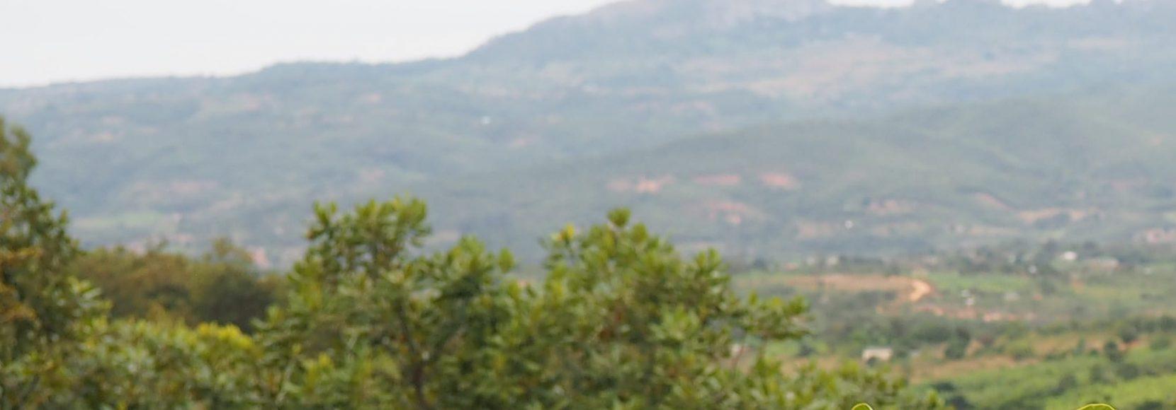 woman coffee farmer Zimbabwe