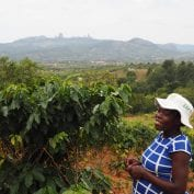 woman coffee farmer Zimbabwe