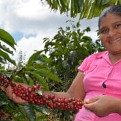 Woman in Honduras inspecting coffee plants