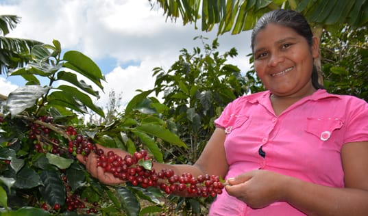 Coffee Consumer Spotlight: Honduran Coffee