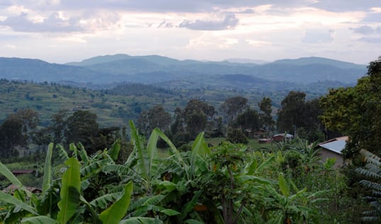 From Bean to Cup: Tracing Rwandan Coffee