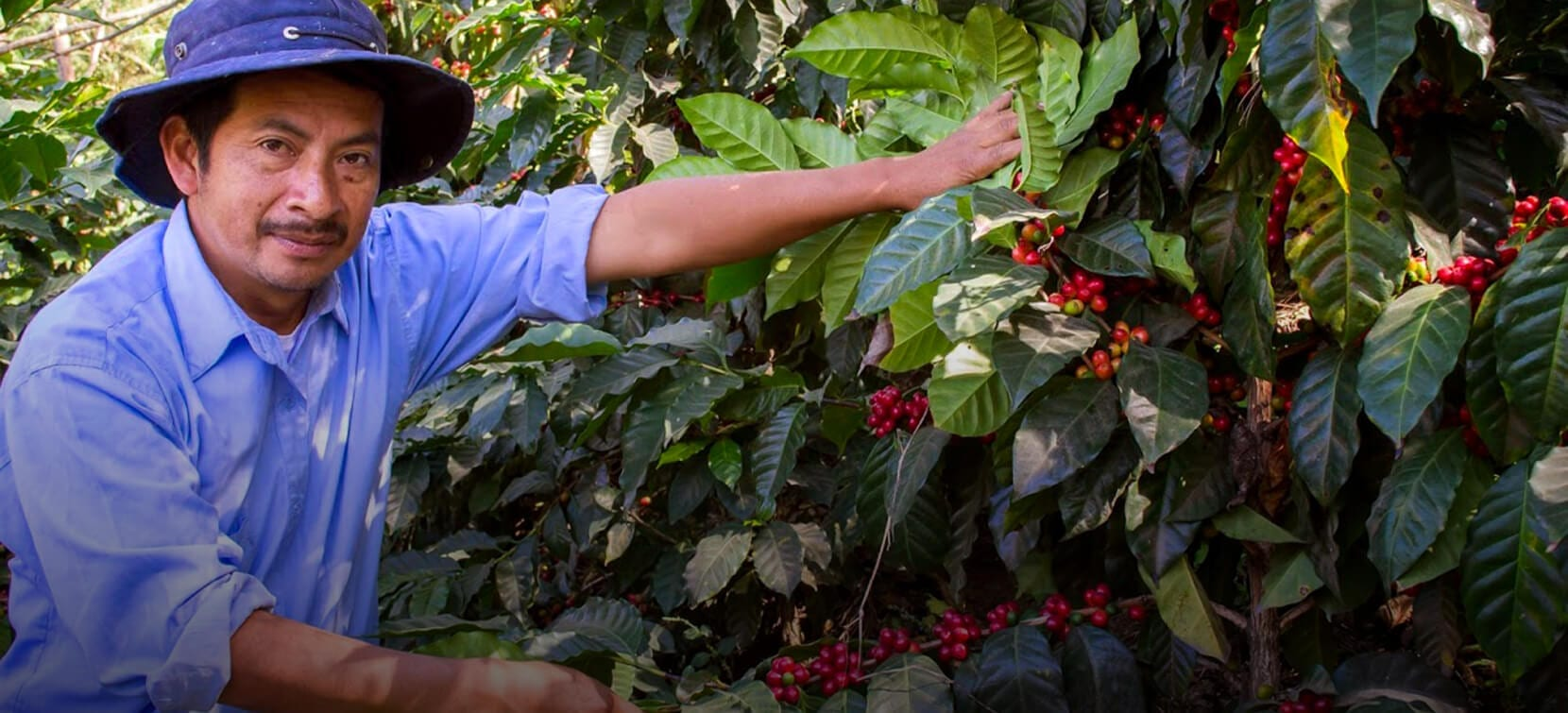 Man smiling looking at coffee plants