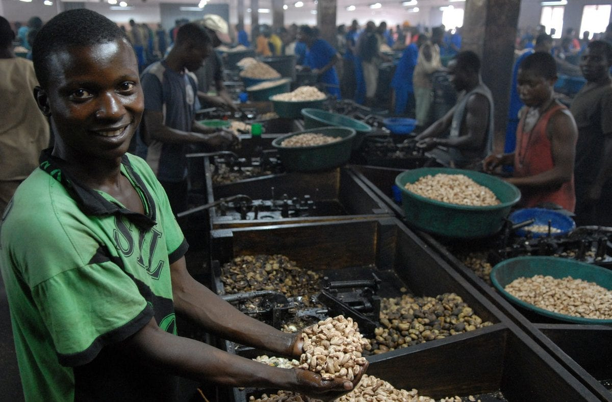 young man works at cashew processor in Mozambique
