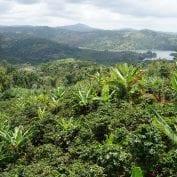 Puerto Rico landscape