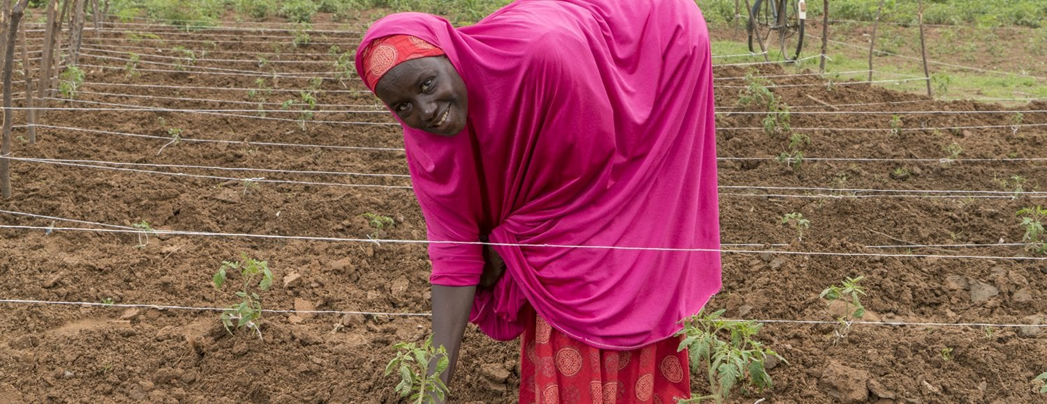 Woman harvesting crops in Nigeria