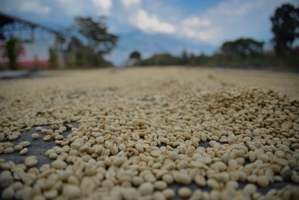 Coffee beans in Peru