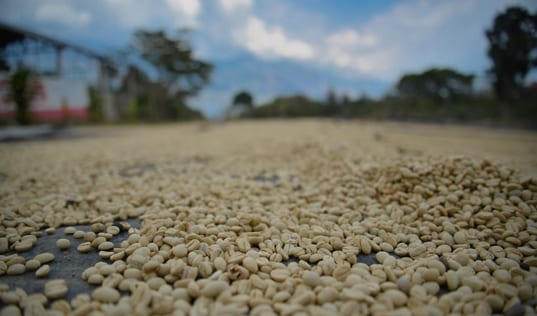 Coffee Consumer Spotlight: Peruvian Coffee