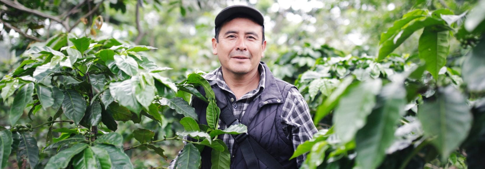 Environmental sustainability extends across technoServe's programs worldwide, including the one selected by this program participant, a coffee farmer in Guatemala
