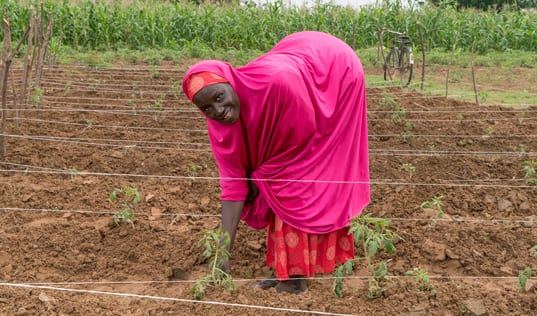 Farmers in Nigeria Use Climate-Smart Techniques to Reduce Post-Harvest Loss