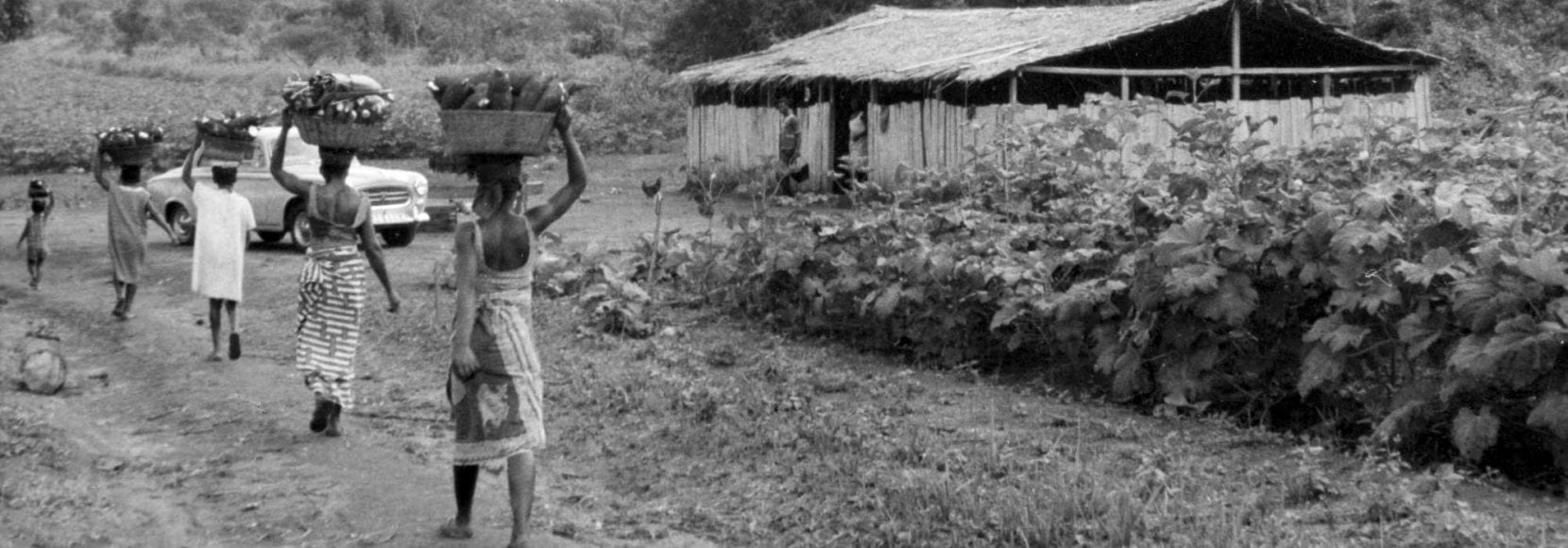 """TechnoServe's origin traces back to the village of Adidome, Ghana. In 1968, Ed Bullard launched TechnoServe – short for """"technology in the service of mankind."""