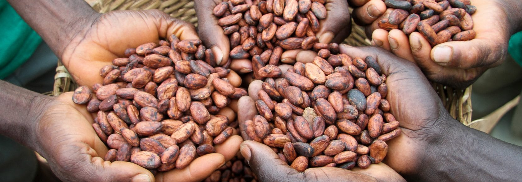 Corporate Sustainability Page Hero Image: Cocoa farmers holding dried cocoa beans in Ghana