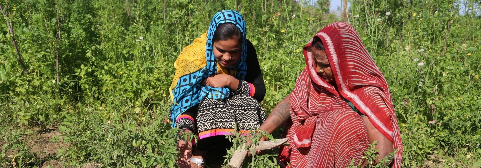 Two women inspecting their crops in India