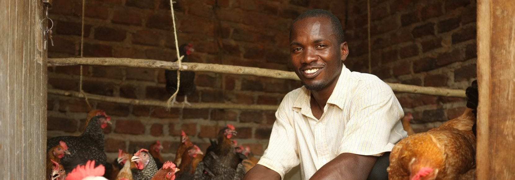 Man smiling while working with chickens