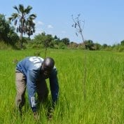 African man in grass