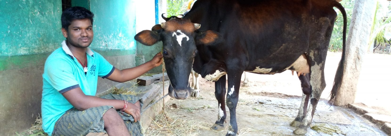 Suresha from the Cargill Agri-Fellows program in India with his newly purchased cow