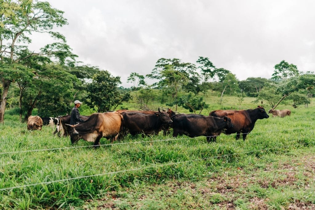An active cattle ranch in Boaco, Nicaragua