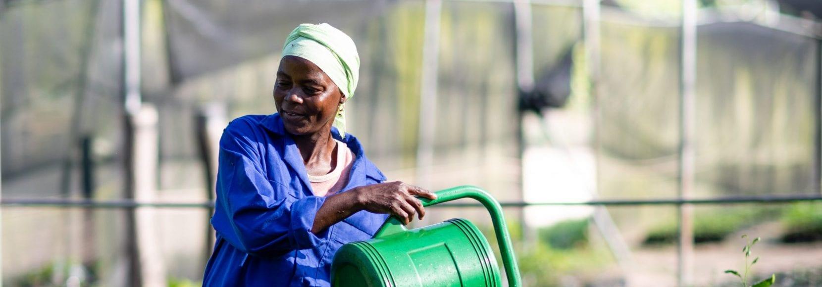Women watering plants in Benin