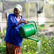 Women watering plants in Benin