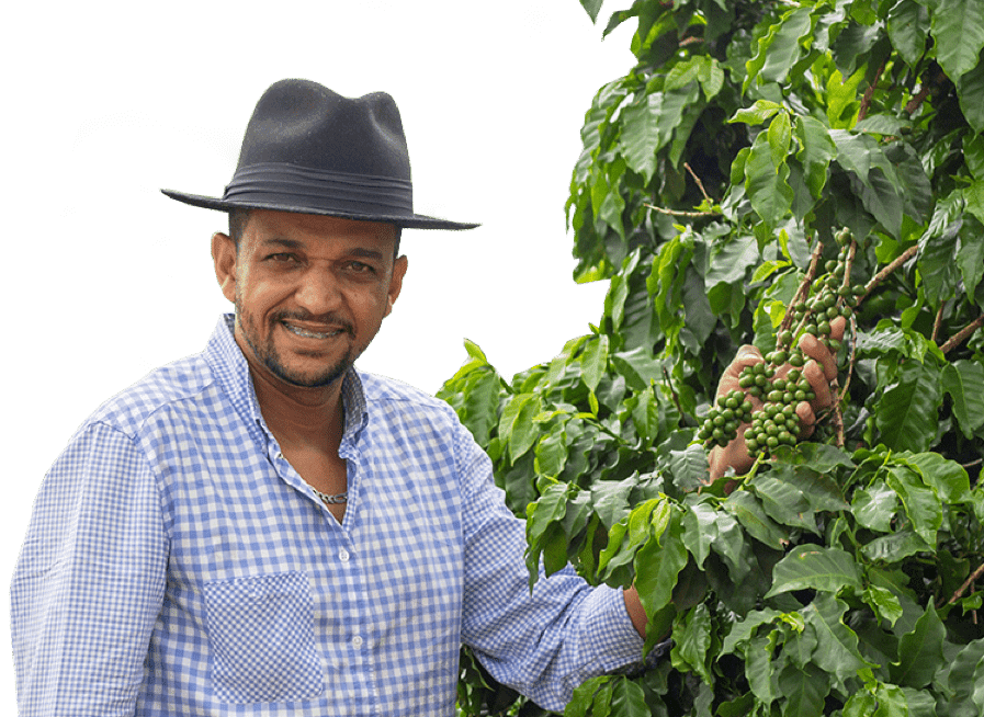 man with coffee tree