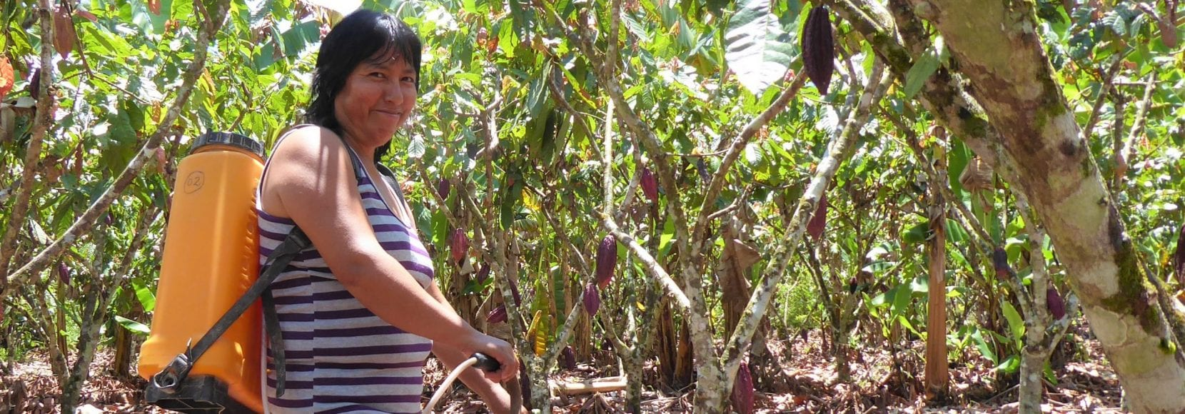 Woman working through her cocoa crops