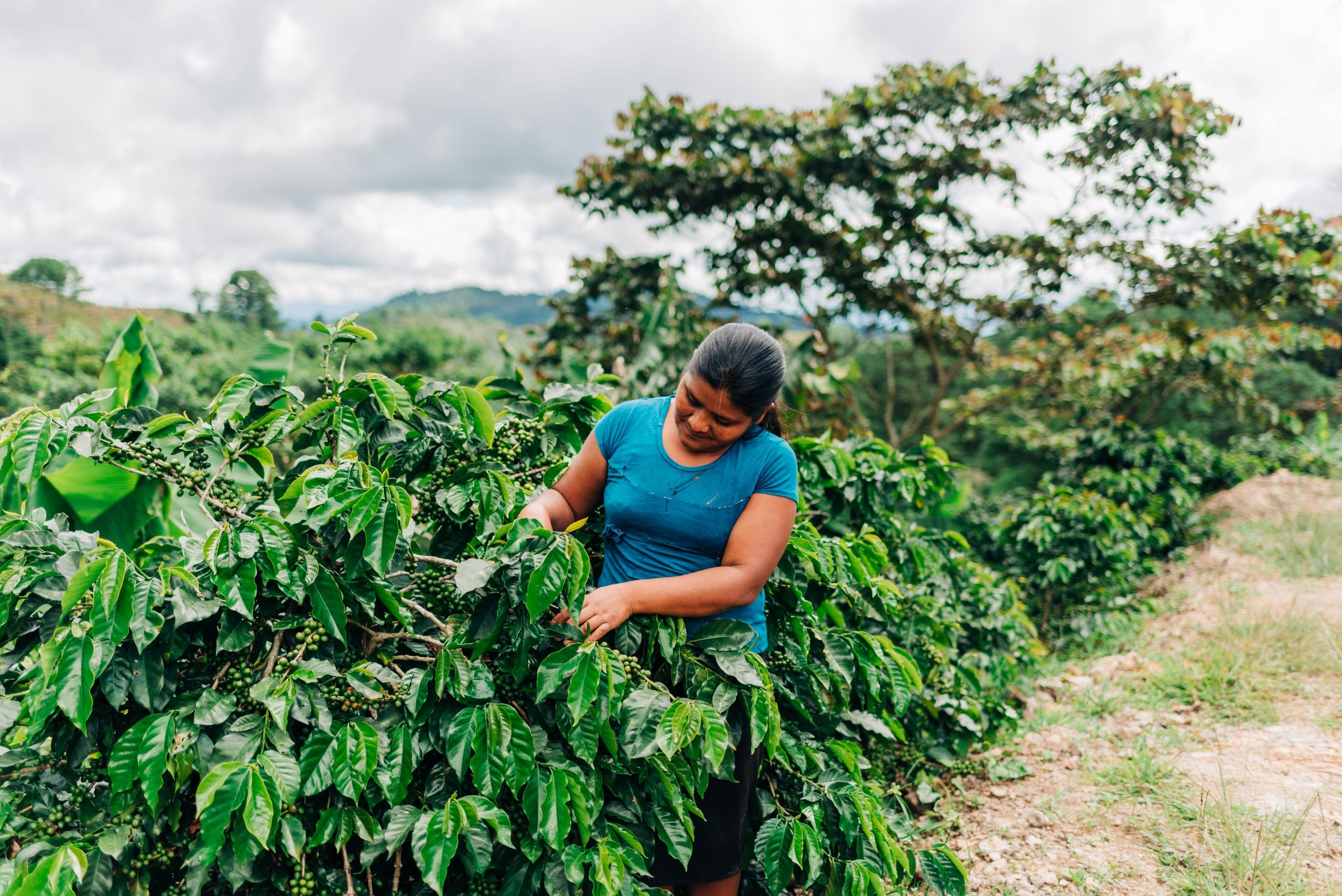 Woman working in coffee farm