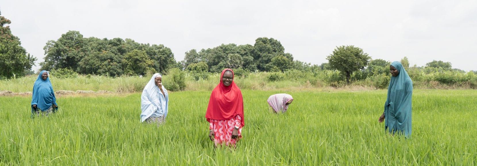 Group of women in a field in Nigeria