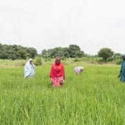 Group of women in a field in Nigeria