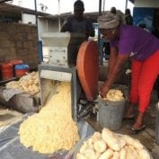 Women working on processing food