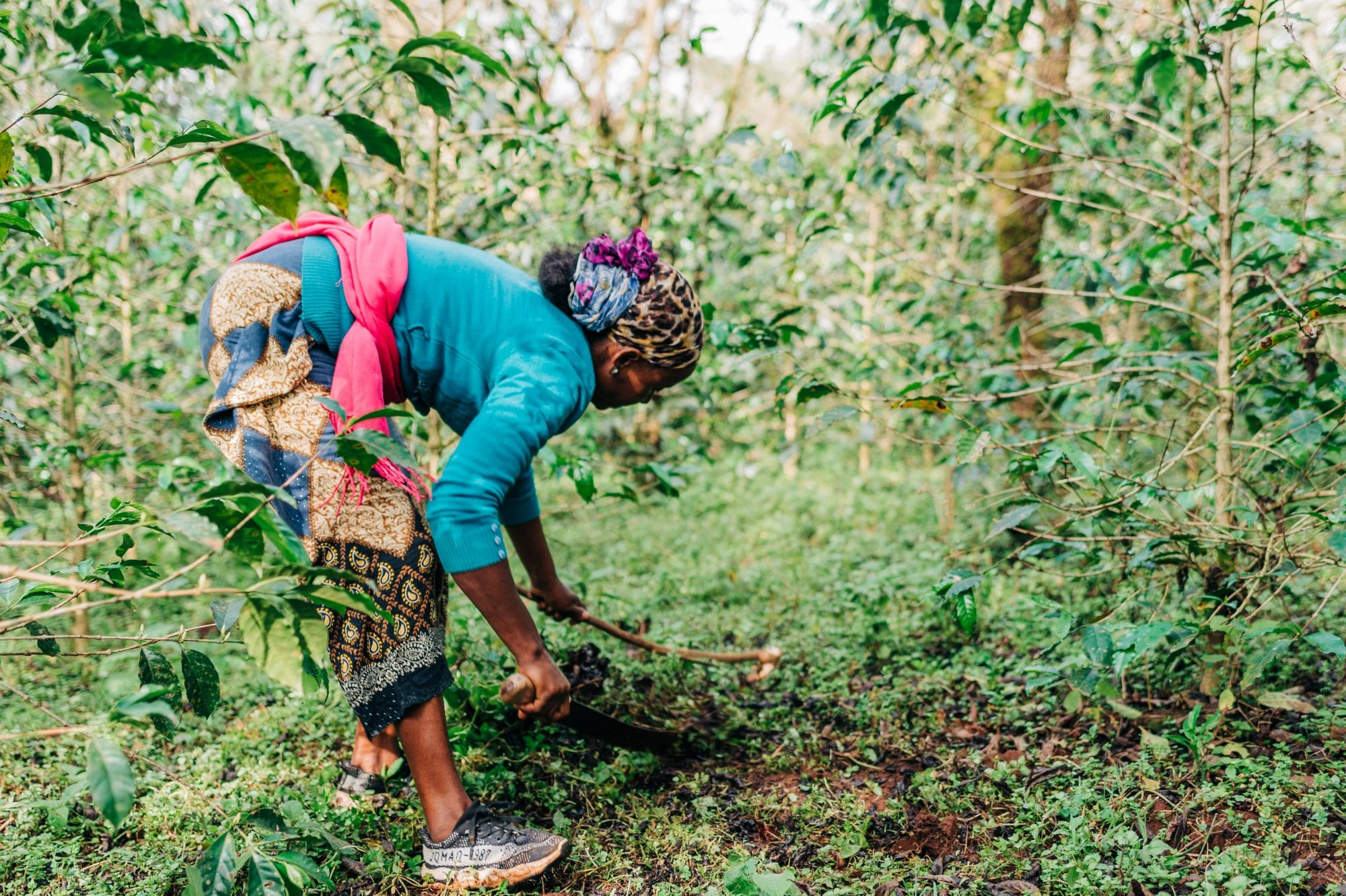 Lubaba tends to her coffee trees in western Ethiopia