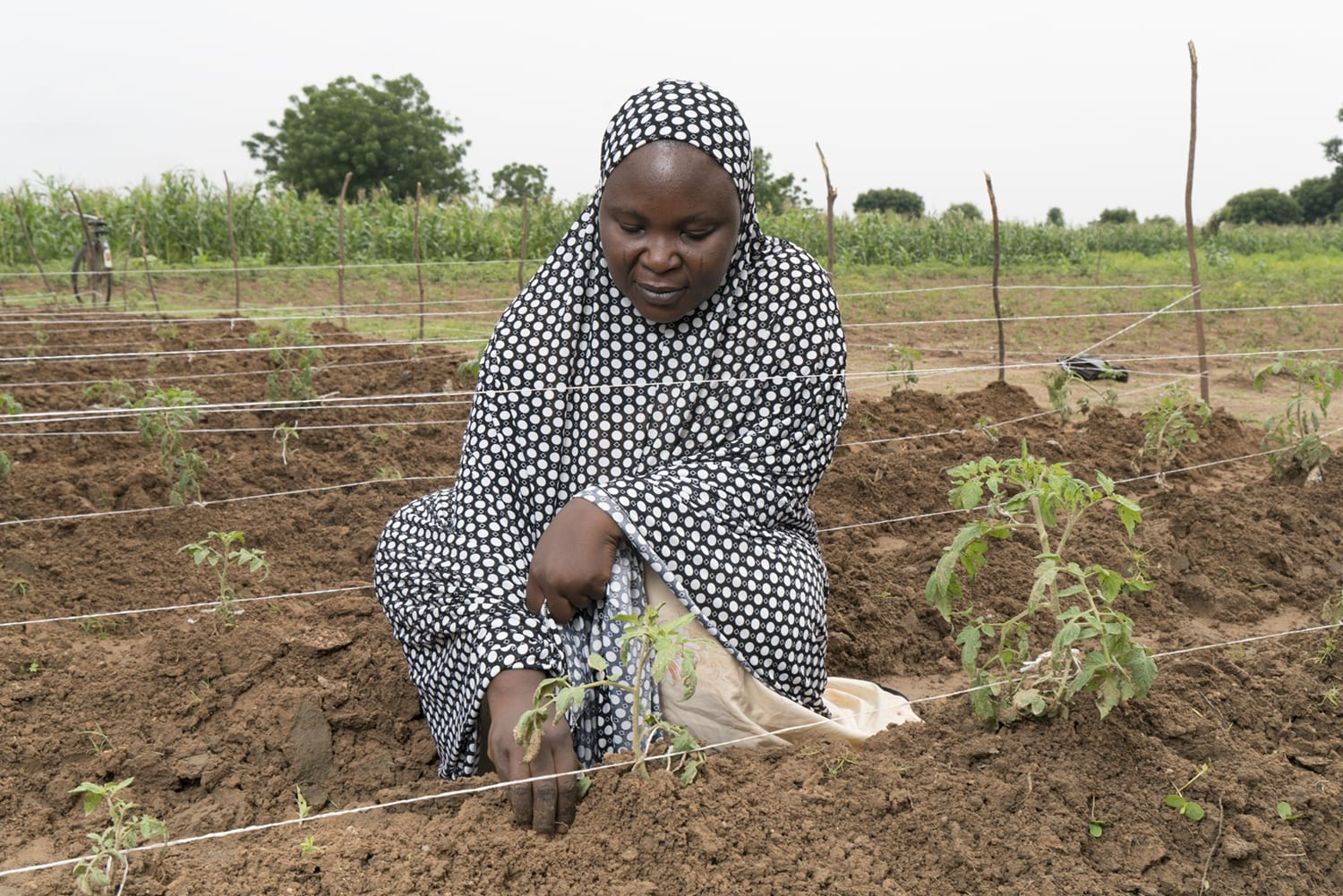 A tomato farmer in Nigeria