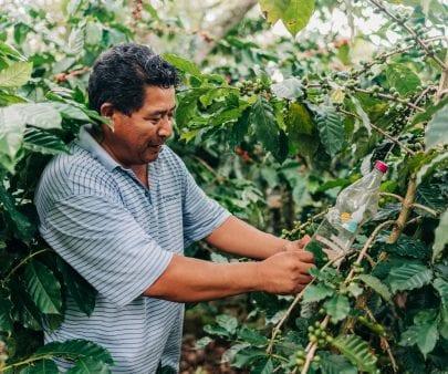 A coffee farmer in Honduras