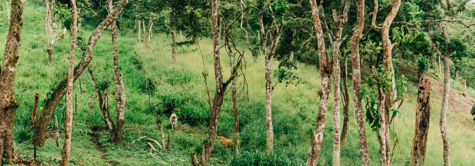 Landscape of trees on mountainside