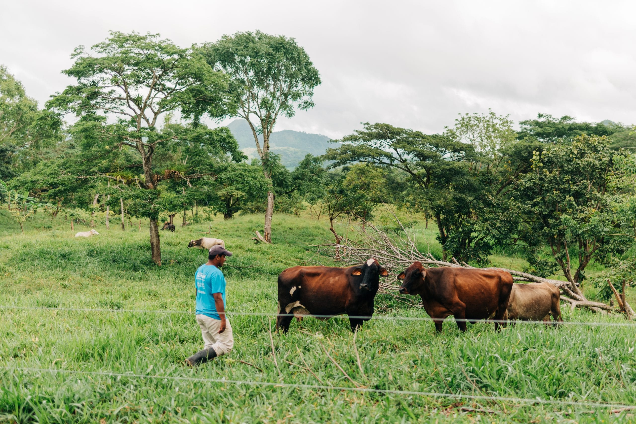 Jeudin Francisco Mendoza Martinez is a cattle rancher in Nicaragua