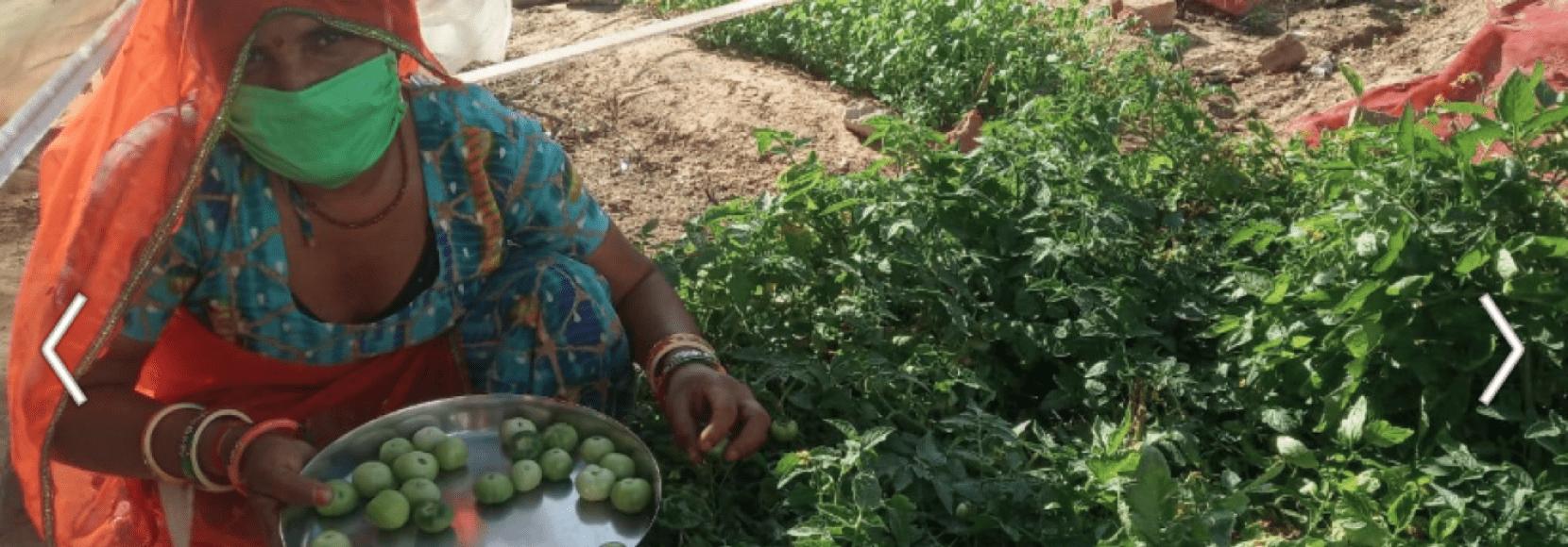 Indian woman farming