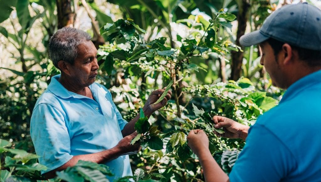 Two people inspecting their fruit plants
